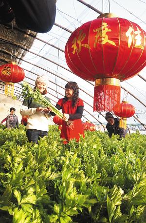 节日期间,天津市北辰区青水源有机蔬菜种植基地布置的红红火火,吸引许多市民前来休闲采摘。(记者 刘玉祥 通讯员 陈立兴 摄)