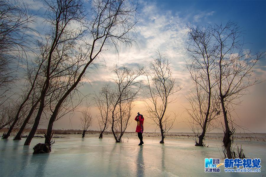 白庄子湿地中的柳树在霞光与冰影的映衬下独成一景,吸引了摄影爱好者采风拍摄。