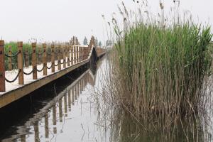 经过近三年的打造,位于宝坻区大唐庄镇东淀村的千亩芦苇荡已经被开发成一片湿地乐园,9个各具特色的人工岛屿、700余米的观赏植物长廊、数十种野生鸟类,都将于月底与游客正式见面。