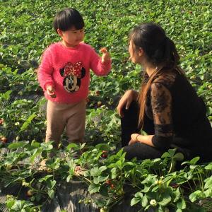 在最冷一周即将到来之际,却是新区自产草莓火热上市的时候。1月29日汉沽街第四届迎新春草莓节将拉开序幕,绿色温暖的种植大棚,首批红润香甜的草莓已经等待采摘,今年采摘季节将持续到4月30日。