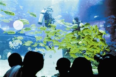 """""""五一""""小长假临近,天津海昌极地海洋公园正在排练新剧《亚特兰蒂斯的后裔》,有趣的是水下无人机将一同参演,给观众带来全新的感受。"""